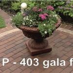 p403 (gala flamea)